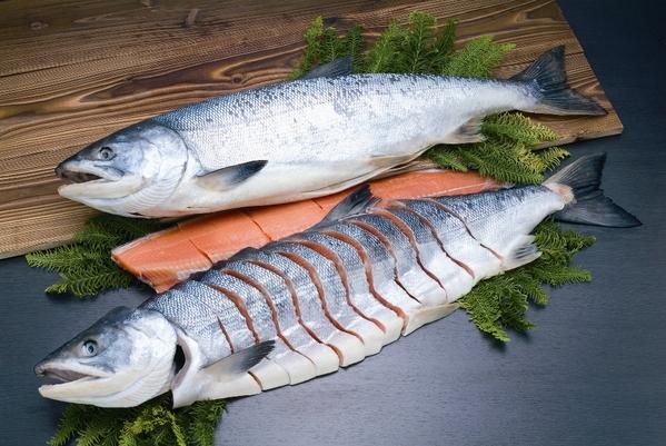 秋鮭さしみ鮭 一本姿造り