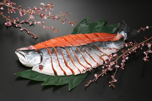 桜ます(さしみ鮭誂え)一本姿切身 SSG