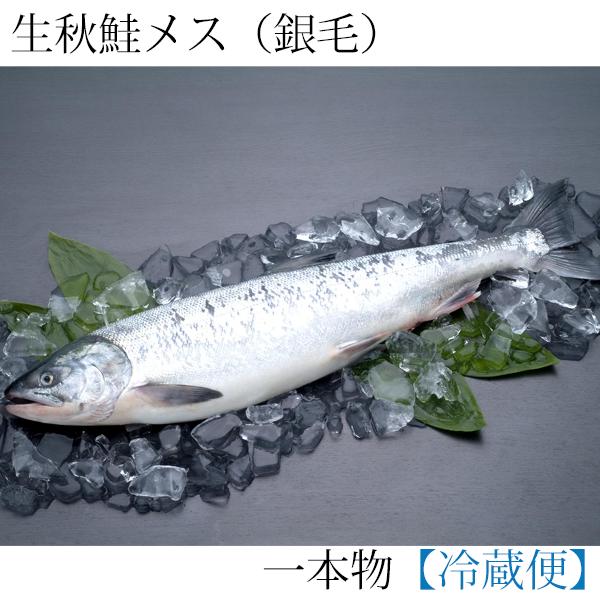 ≪入荷次第発送≫生秋鮭一本物(銀毛メス) (切身加工なし)3.5kg 生筋子・いくらのたれ付 AM35