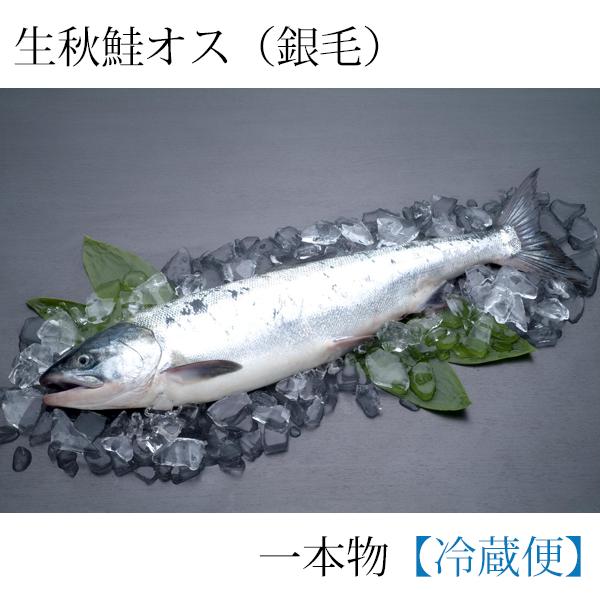 ≪入荷次第発送≫生秋鮭一本物(銀毛オス)(切身加工なし) 3.5kg AO35