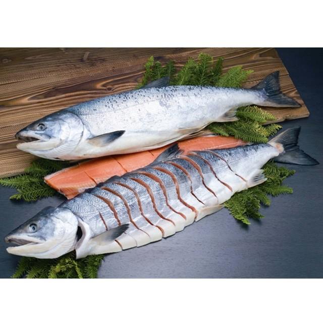 秋鮭さしみ鮭 一本姿造り ASD