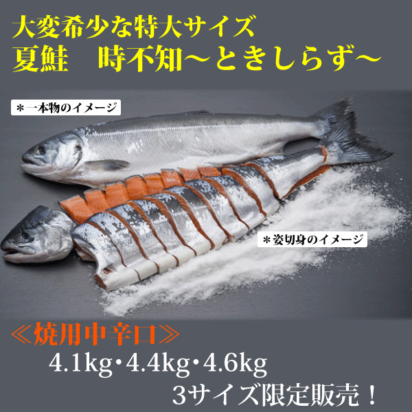 【オンライン限定】大変希少な特大熟成焼用中辛時不知姿切身 4.1kg・4.4kg・4.6kg