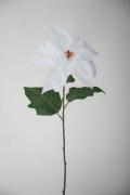 ベルベットシングルポインセチア(W)