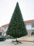 10mノーブルツリー