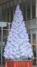 7.2Mノーブルホワイトツリー