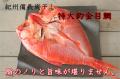 紀州備長炭干し 銚子産 特大釣り金目鯛