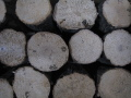 【早い物勝ちの在庫処分SALE!】送料無料!極上クヌギ産卵木 S品にカビが少し生えた物 (直径 80mm前後が11本と、120mm前後が5本)  中箱 1箱