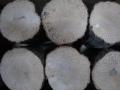 【早い物勝ちの在庫処分SALE!】送料無料!クヌギ・コナラ産卵木 B品 M (直径 90mm前後)と、2L(直径 140mm前後) 1箱
