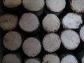 クヌギ産卵木 SS(直径 60mm前後) 1箱(15本)