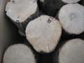 空中栽培コナラ産卵木 A品 2L (直径 140mm前後) 1箱(4本)