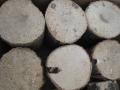 空中栽培コナラ産卵木 A品 M (直径 90mm前後) 1箱(9本)