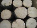 空中栽培コナラ産卵木 極上品 S (直径 75mm前後) 1箱(12本)