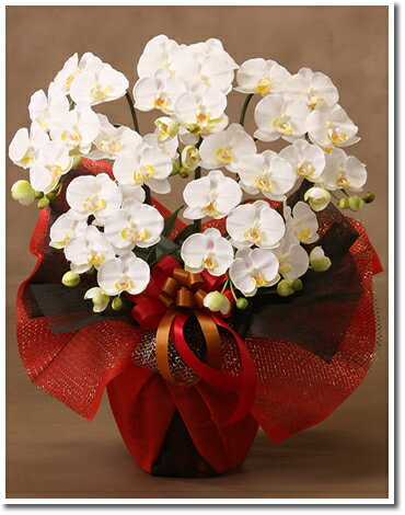 【母の日用フラワーギフト】光触媒 アートフラワー (造花) 胡蝶蘭 M5本立 白
