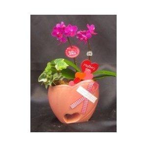 【母の日用フラワーギフト】マイクロ 胡蝶蘭 2本立 陶器ハート鉢入