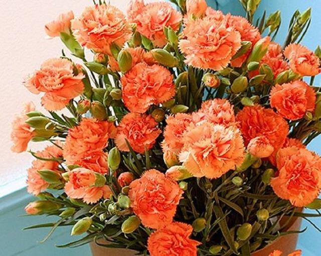 【母の日フラワーギフト】カーネーション鉢植え オレンジワッフル5号カゴ付