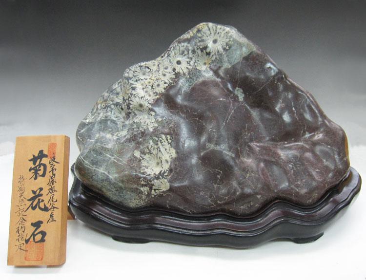 根尾谷 菊花石