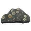 菊花石 景石