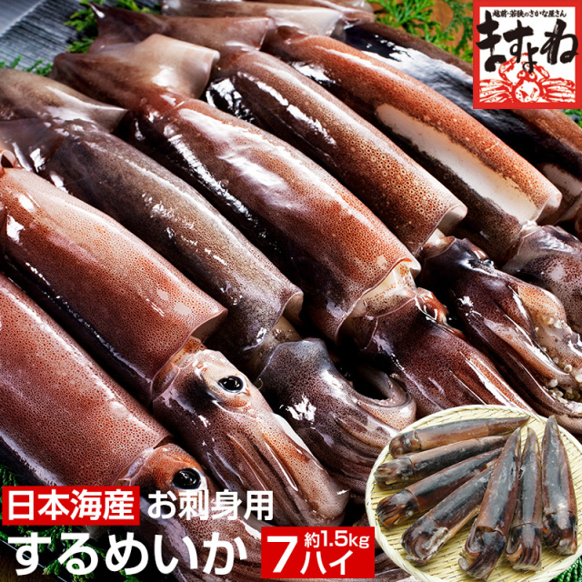 日本海産お刺身用するめいか(真イカ)中型サイズ×7ハイ(1.5kg前後)[送料無料]【レビュー高評価4.66!1,039件頂きました!】(いか/イカ/烏賊/刺身/スルメイカ)[海鮮/魚介/海の幸/海鮮丼]