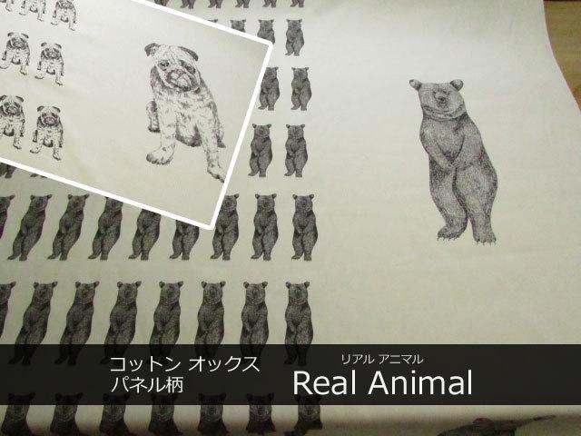 コットン オックス  Real Animal リアルアニマル パネル柄
