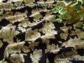 メーカー放出反!くすんだ色のバラ柄 『 ウール混ジャージ アンティーク ローズ 』 ブラック