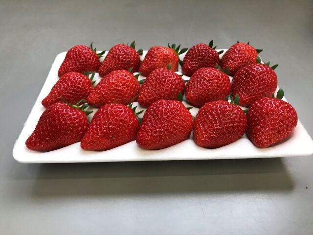 ◆いちご 各種セット 品種【よつぼし】