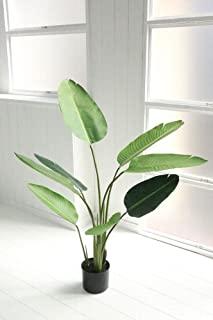 オーガスタ    人工観葉植物 造花  インテリア  グリーン
