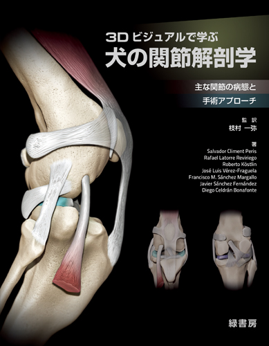 3Dビジュアルで学ぶ犬の関節解剖学