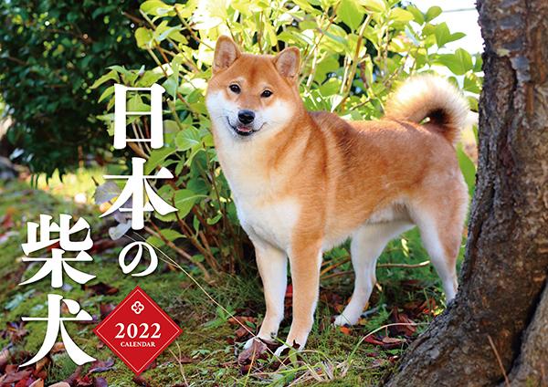 日本の柴犬カレンダー2022(壁掛け)