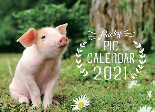 Lucky Pigカレンダー2021(卓上)