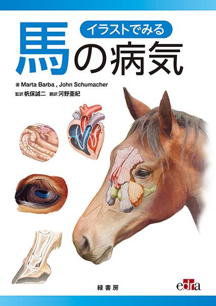 イラストでみる馬の病気