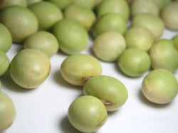 秘伝 大豆 豆