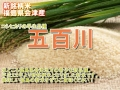 会津 五百川 玄米