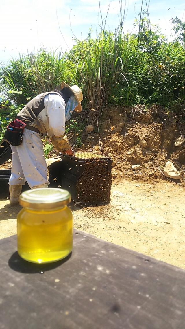 美味しい蜂蜜が採れました