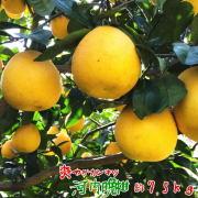 爽快柑橘 河内晩柑 約7.5kg 【送料無料】