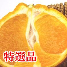 3月1日発送 熟デコ (通称不知火・デコポン)特選 約5kg