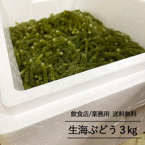 【飲食店・業務用専用】生海ぶどう3kg(タレ無し)送料無料