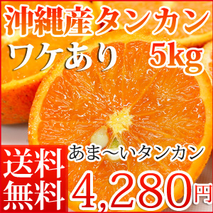 タンカン5kg