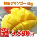 ワケありマンゴー【ご自宅専用】【送料無料】4kg