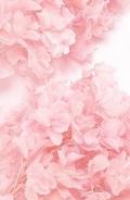 カシワバアジサイ(単色)  ピンク