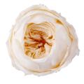 ローズ・ピオニー ホワイトシャンパン 02760-021