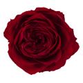 ローズ・ララ ワインレッド 02780-471 廃盤セール60%OFF