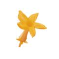 ジャスミン (ステファノーティス) フルーティーオレンジ