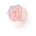ローズ・のんの・はないろ  ホワイト/ピンク メーカー廃盤セール 60%OFF