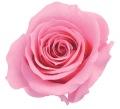 ローズ・いずみ プリンセスピンク