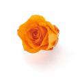 ローズ・いずみ・はないろ  オレンジ/レッド メーカー廃盤セール 60%OFF