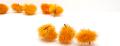 チェスト・ホースク オレンジ