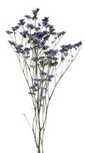 リモニュームHL N.ブルー 17535