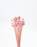 ボタンフラワー キャンディーピンク 30160-120