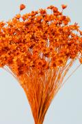 スターフラワー・ミニ オレンジ メーカー廃盤セール60%OFF