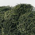 スパニッシュモス グリーン (※こちらの商品はご注文後の在庫確認取り寄せ商品になります。メーカーに在庫確認後、ご連絡させていただきます。)